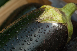 Auberginenpflanzen kaufen von Lubera