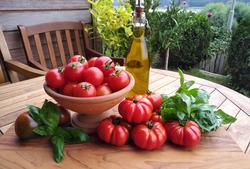Balkontomaten Pflanzen von Lubera kaufen