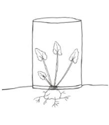 rhabarber pflanzen im lubera gartenshop. Black Bedroom Furniture Sets. Home Design Ideas
