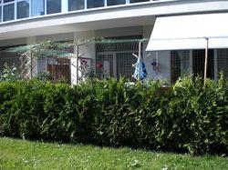lebensbaum orientalischer lebensbaum 39 brabant 39. Black Bedroom Furniture Sets. Home Design Ideas