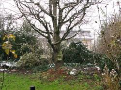 kann ich einen apfelbaum nach einem kirschbaum setzen frage 33571. Black Bedroom Furniture Sets. Home Design Ideas