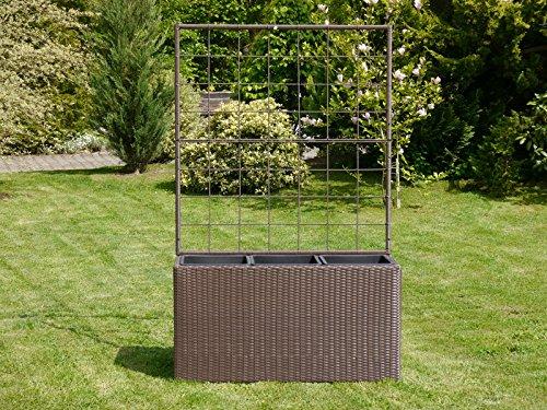 traubenkiwi vitikiwi actinida arguta im online shop von lubera kaufen. Black Bedroom Furniture Sets. Home Design Ideas