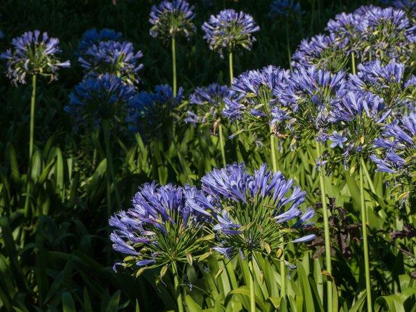 Pflanzen f r den wintergarten tipps f r die auswahl for Pflanzen liefern