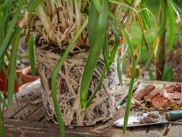pflanzen umtopfen wie oft wann und wie ihr umtopfen m sst. Black Bedroom Furniture Sets. Home Design Ideas