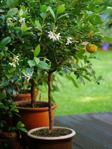 pflanzen umtopfen umtopfen von sollte regelmig geschehen pinterest tpfchen und plaetzchen with. Black Bedroom Furniture Sets. Home Design Ideas