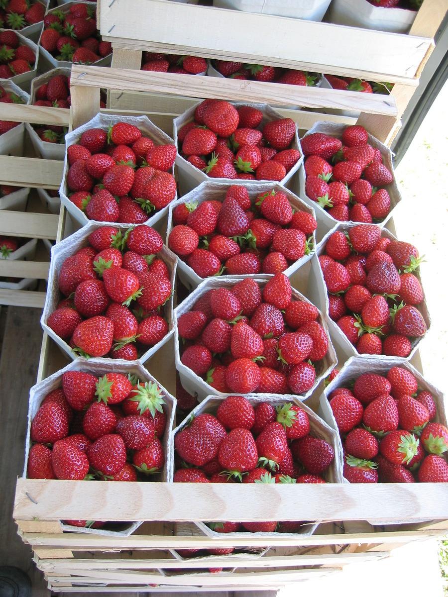 Erdbeere Wadenswil 6 6er Trager Lubera De