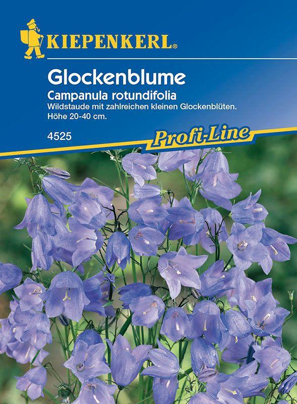 Glockenblumen Glockenblume Campanula Rotundifolia Lubera De