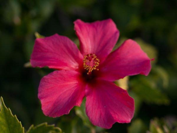 Exotische pflanzen im mittelmeerraum die sch nsten exoten for Pflanzen im raum