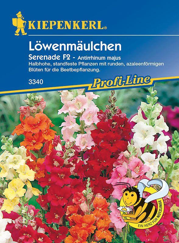 Lowenmaulchen Serenade Mischung Antirrhinum Majus Lubera De