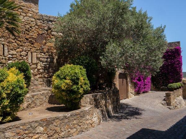 Berühmt Olivenbaum pflanzen: So gelingt die Auspflanzung in Deutschland @NP_46