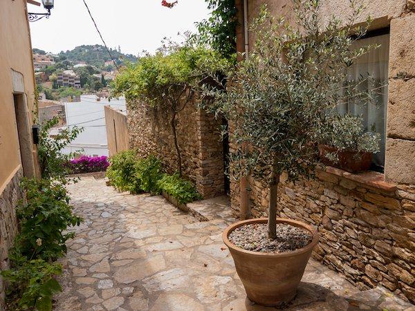 olivenbaum verliert bl tter ursachen und pflegema nahmen. Black Bedroom Furniture Sets. Home Design Ideas