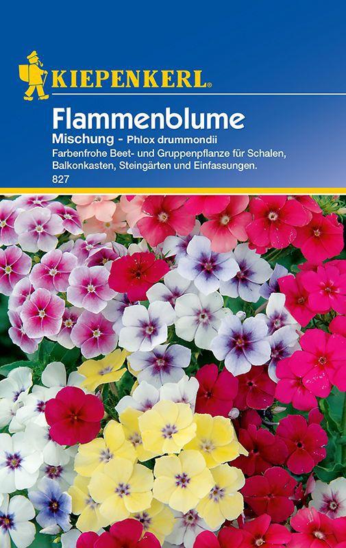 Außergewöhnlich Phlox: Flammenblume, Phlox-Mischung, Phlox drummondii: Lubera.de @RE_71