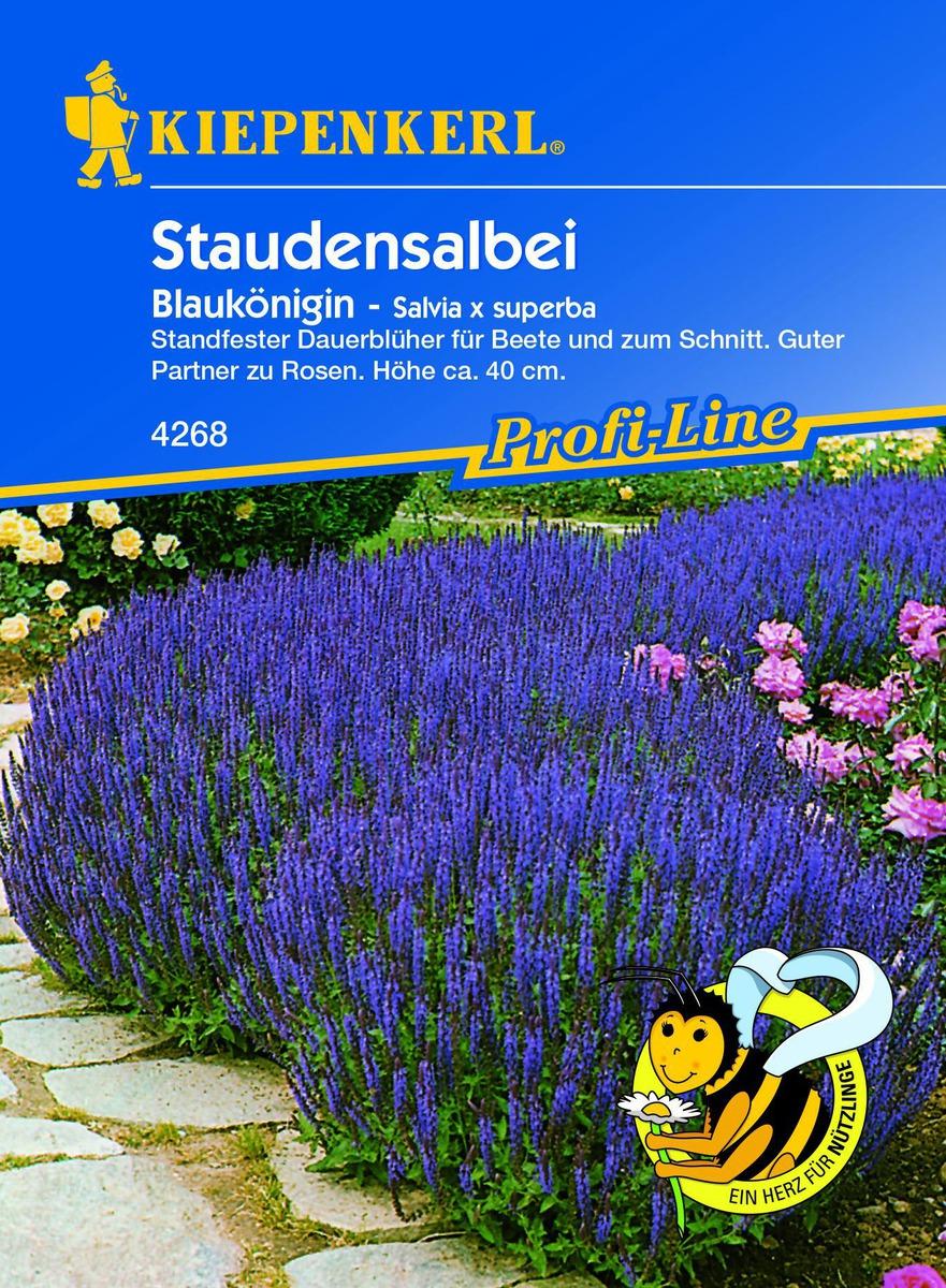 Salbei Ziersalbei Zier Salbei Blaukonigin Salvia X Superba