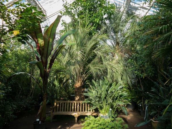 Pflanzen für den Wintergarten - Tipps für die Auswahl