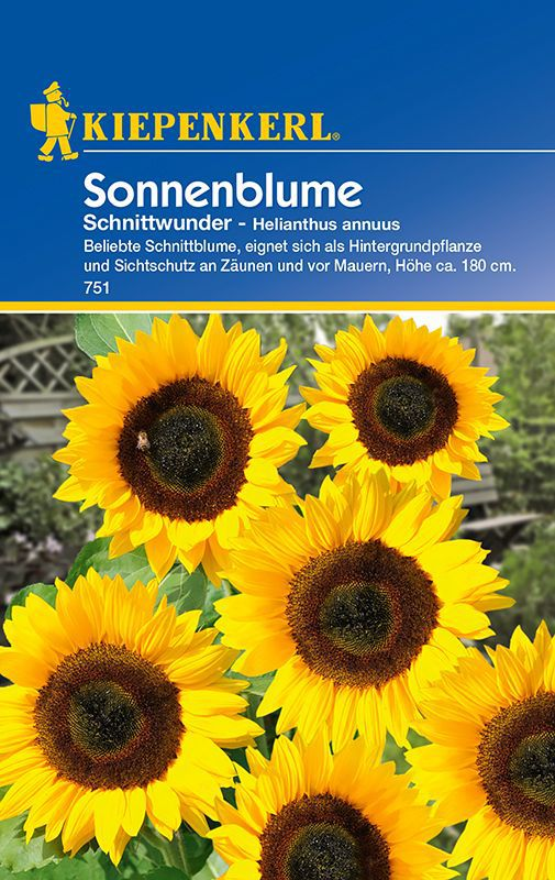 sonnenblumen schnittwunder helianthus annuus. Black Bedroom Furniture Sets. Home Design Ideas