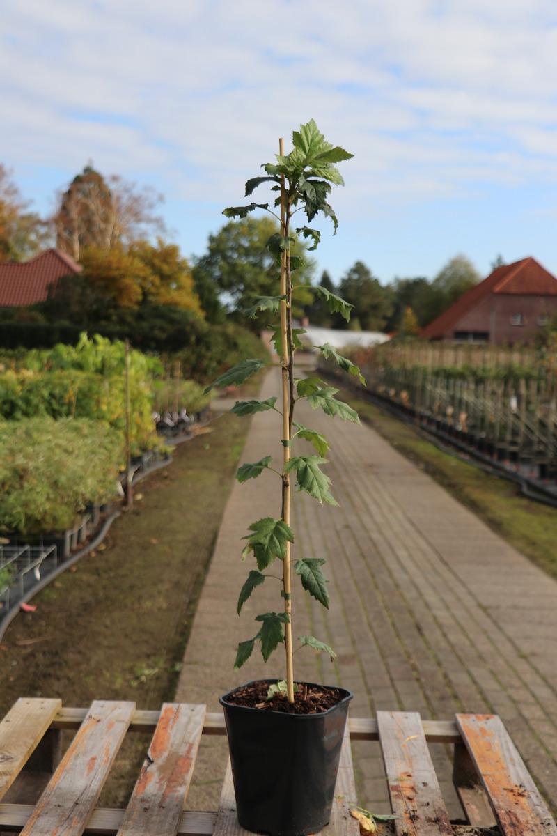 Pflanzenverpackungen für Versandhandel 25 Stk Pflanzenversand Pflanzen
