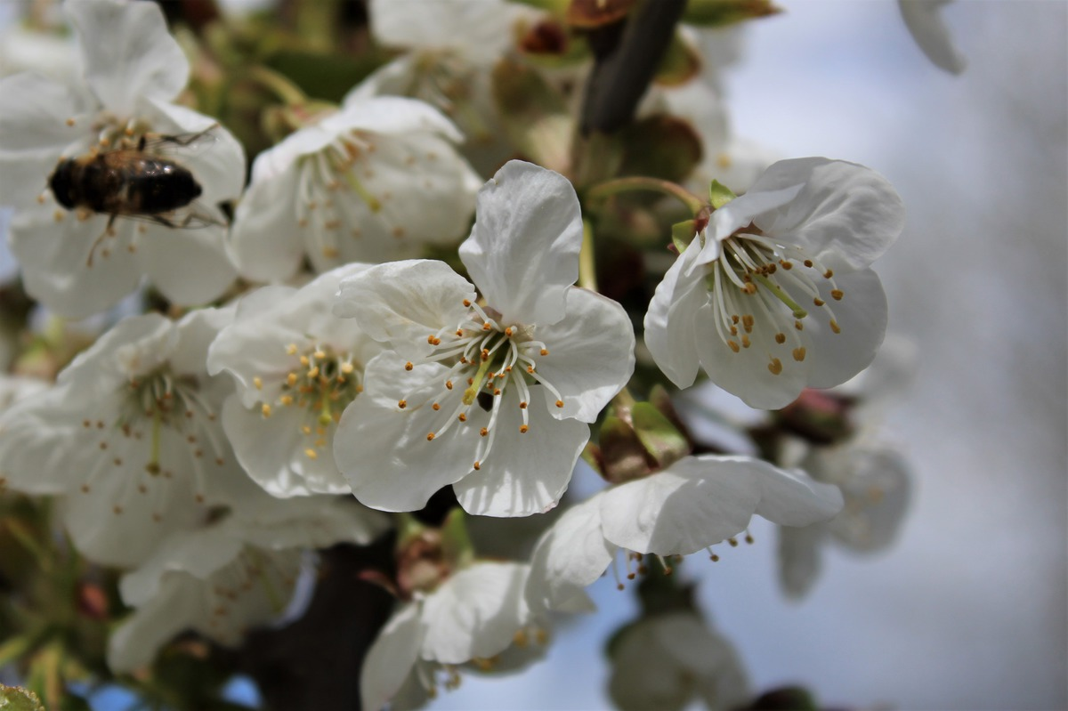 Kirschblüten spritzen Kenya moore sex video