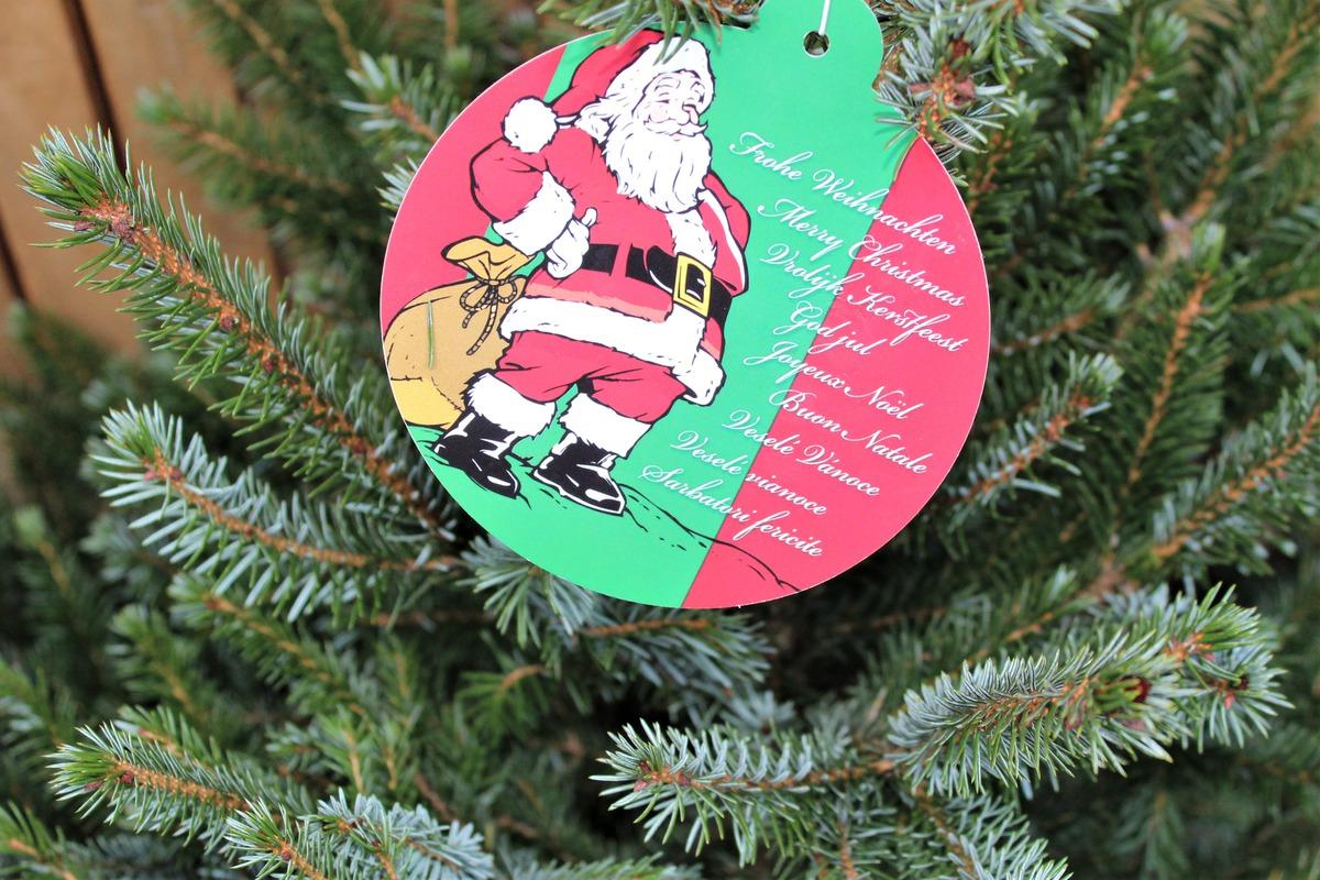 Serbisch Frohe Weihnachten.Weihnachtliche Serbische Fichte Im Roten Deko Topf