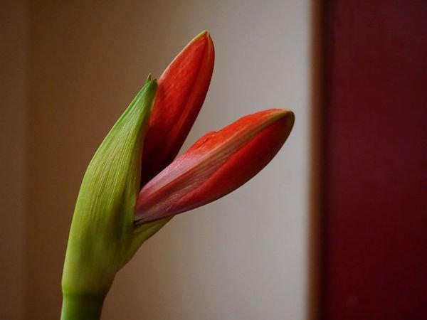 Zimmerpflanzen Die Wenig Wasser Benötigen zimmerpflanzen gießen so erkennt ihr den durst eurer pflanzen
