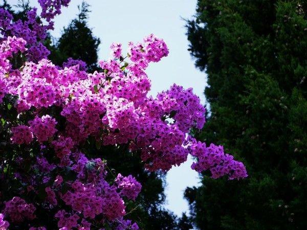 Garten von Alfabia
