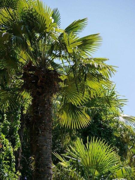 mediterrane pflanzen f r den garten ein berblick. Black Bedroom Furniture Sets. Home Design Ideas
