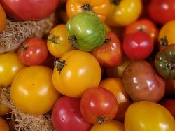 Heirloom Tomaten Titelbild pixabay