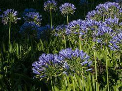 Mediterrane pot plants Lubera