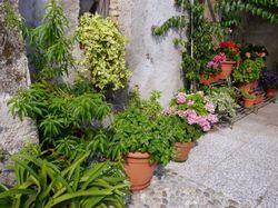 Die Schonsten Kubelpflanzen Fur Terrasse Und Balkon
