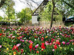 Tulpenzwiebeln kaufen Frühlingsblumen Lubera