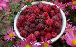 Fruit Friends from Lubera