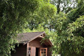 Bambuspflanzen Stilvolles Grun Mit Fernostlichem Flair