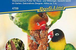 Kapuzinerkresse *Lady Bird* 3924 einfache Anzucht Kiepenkerl