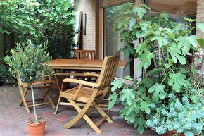 Einen Olivenbaum Im Topf Pflanzen Und Pflegen Ein Erfahrungsbericht