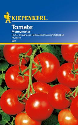 Tomaten: Moneymaker, Lycopersicon lycopersicum