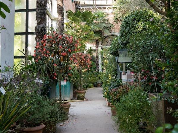 Kübelpflanzen und Balkonpflanzenüberwintern so geht es richtig ~ 26155015_Sukkulenten Überwintern Temperatur