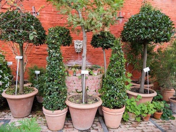 Pflanzen im Gewächshausüberwintern so stimmen Licht und Temperatur ~ 26155015_Sukkulenten Überwintern Temperatur