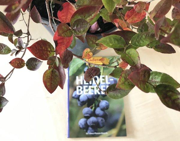 Lubera Pflanzen