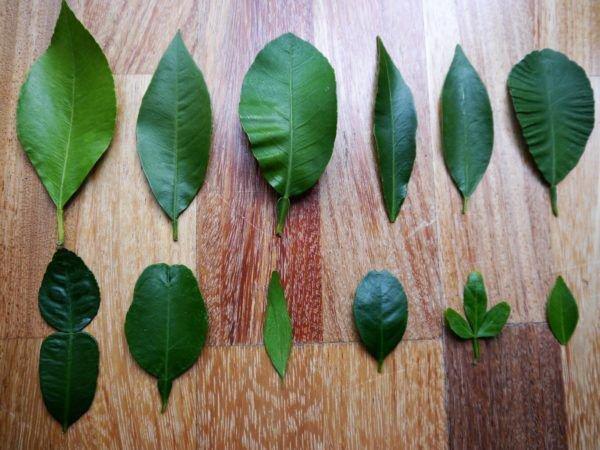Blätter bestimmen
