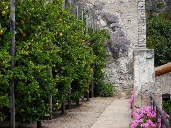 Mein Zitronenbaum verliert Blätter - Ursachen und Sofortmaßnahmen